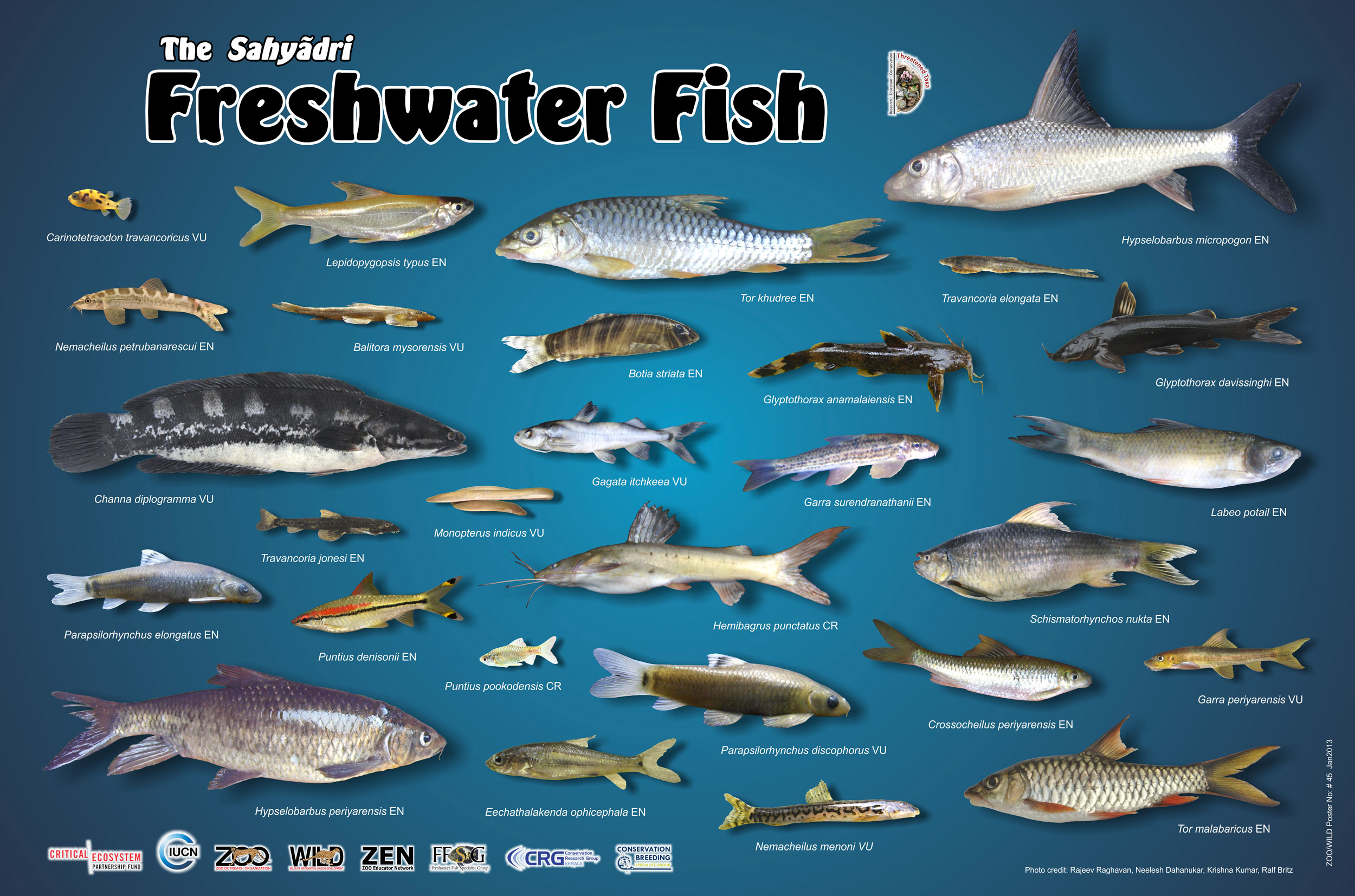 Zoo outreach organization for Fish s wild